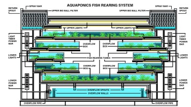 Aquaponics system detail