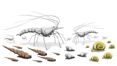 Crustaceans and Mollusks
